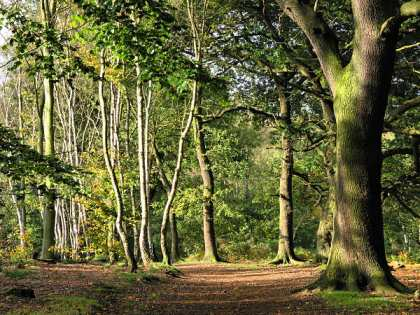 sherwood_forest04